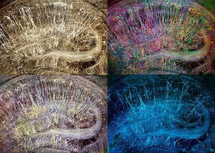 О Лабораториях - Развитие пластичности мозга